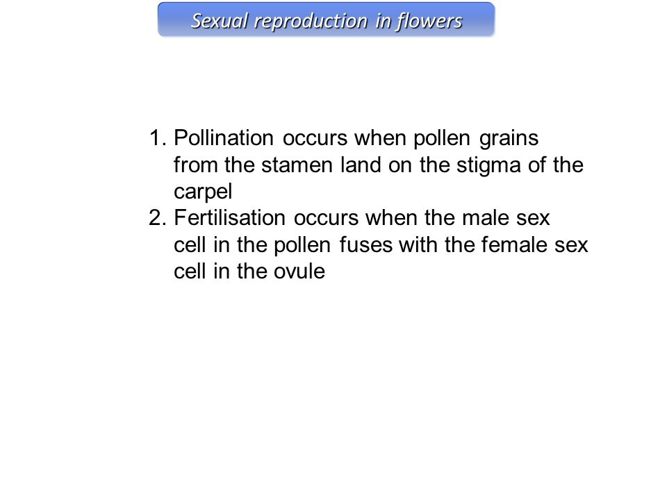 1.Pollination occurs when pollen grains from the stamen land on the stigma of the carpel 2.Fertilisation occurs when the male sex cell in the pollen f