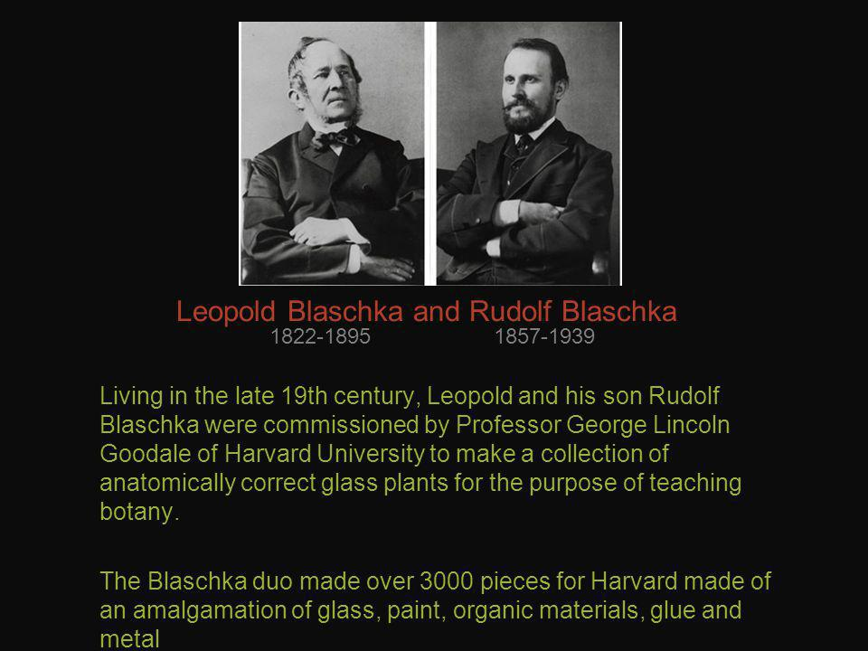 Leopold Blaschka and Rudolf Blaschka Living in the late 19th century, Leopold and his son Rudolf Blaschka were commissioned by Professor George Lincoln Goodale of Harvard University to make a collection of anatomically correct glass plants for the purpose of teaching botany.