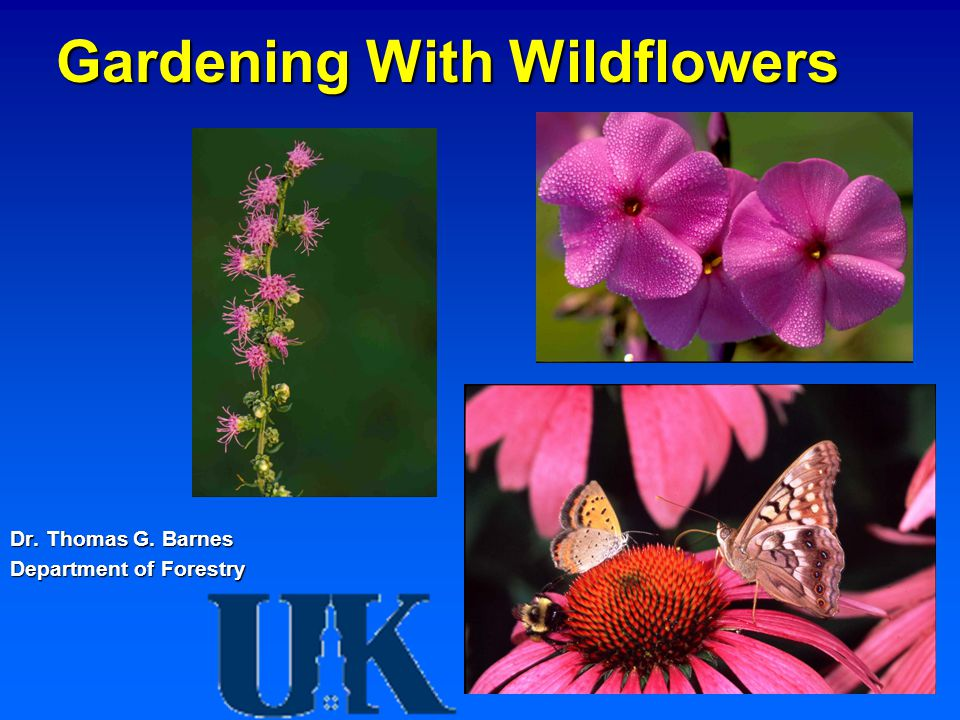 Gardening With Wildflowers Dr. Thomas G. Barnes Department of Forestry