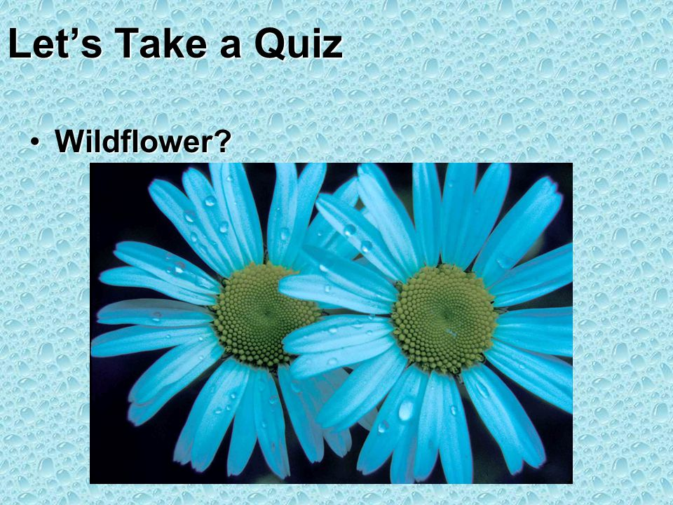 Lets Take a Quiz Wildflower?Wildflower?