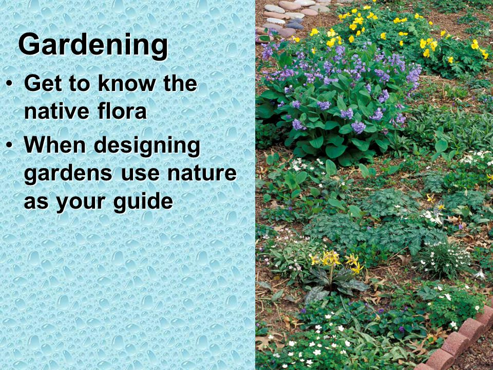 Gardening Get to know the native floraGet to know the native flora When designing gardens use nature as your guideWhen designing gardens use nature as your guide