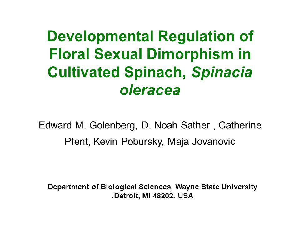 Developmental Regulation of Floral Sexual Dimorphism in Cultivated Spinach, Spinacia oleracea Edward M. Golenberg, D. Noah Sather, Catherine Pfent, Ke