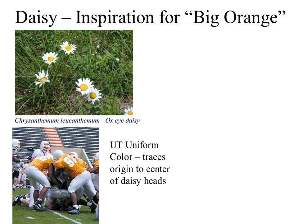 UT Uniform Color – traces origin to center of daisy heads