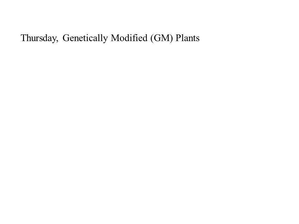 Thursday, Genetically Modified (GM) Plants