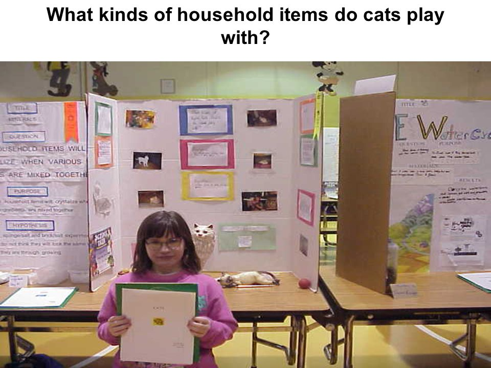 What kinds of household items do cats play with?