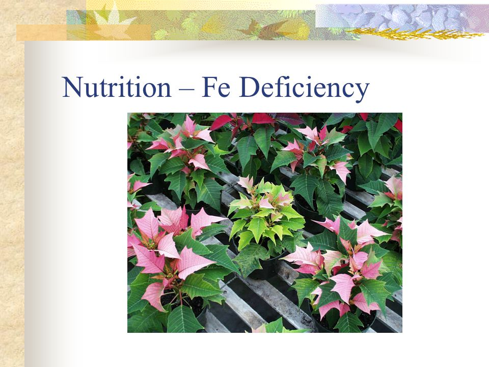 Nutrition – B and Mg Deficiency