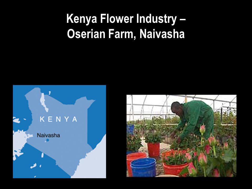 Kenya Flower Industry – Oserian Farm, Naivasha