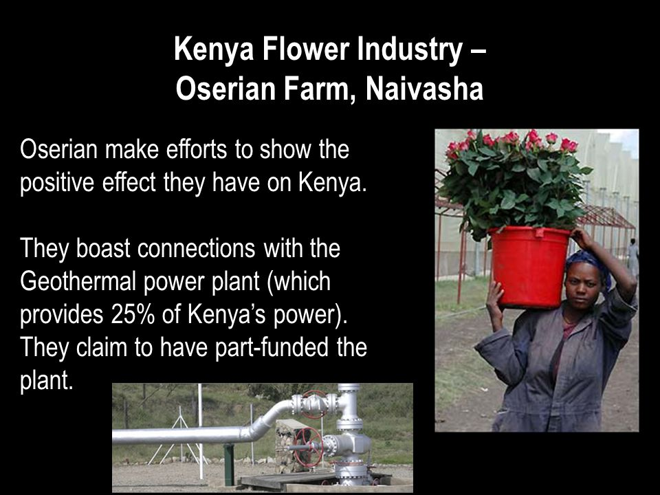 Kenya Flower Industry – Oserian Farm, Naivasha Oserian make efforts to show the positive effect they have on Kenya.