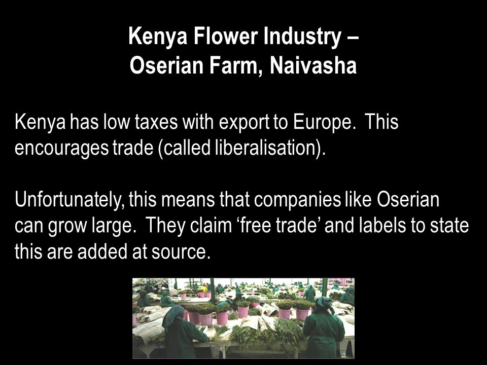 Kenya Flower Industry – Oserian Farm, Naivasha Kenya has low taxes with export to Europe. This encourages trade (called liberalisation). Unfortunately
