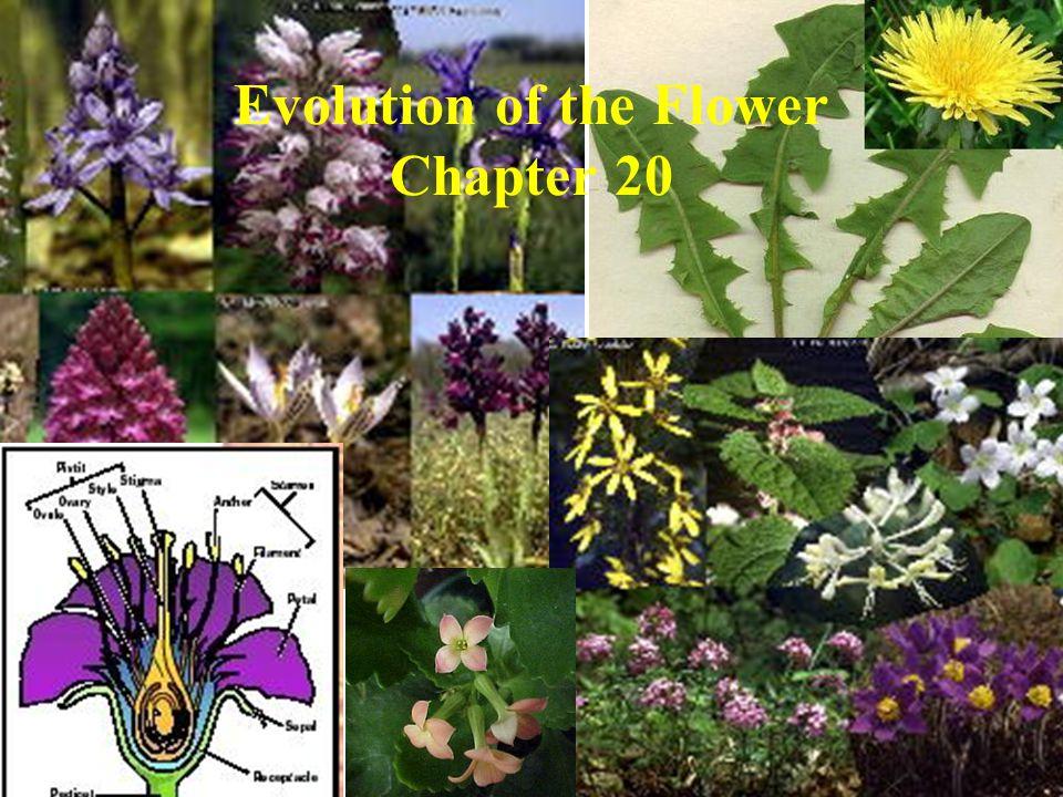 Evolution of the Flower Chapter 20