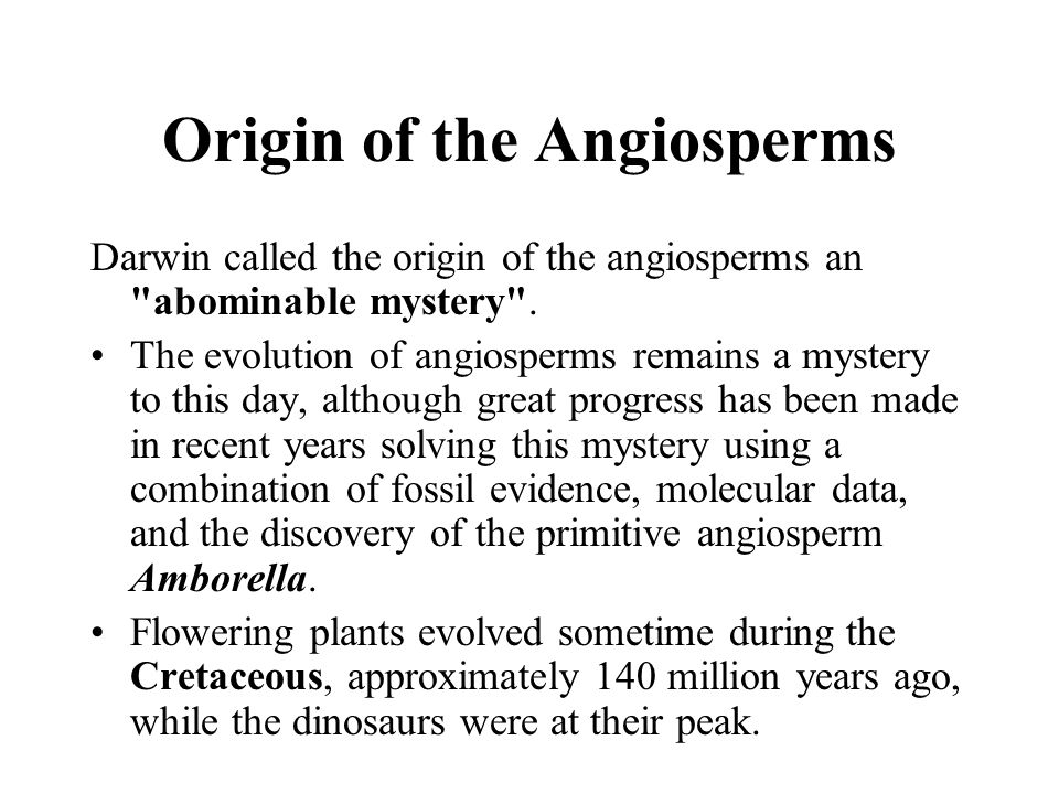 Origin of the Angiosperms Darwin called the origin of the angiosperms an
