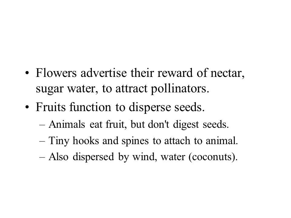 Flowers advertise their reward of nectar, sugar water, to attract pollinators. Fruits function to disperse seeds. –Animals eat fruit, but don't digest