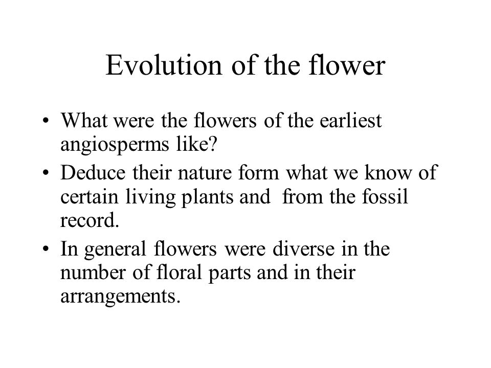 Evolution of the flower What were the flowers of the earliest angiosperms like? Deduce their nature form what we know of certain living plants and fro