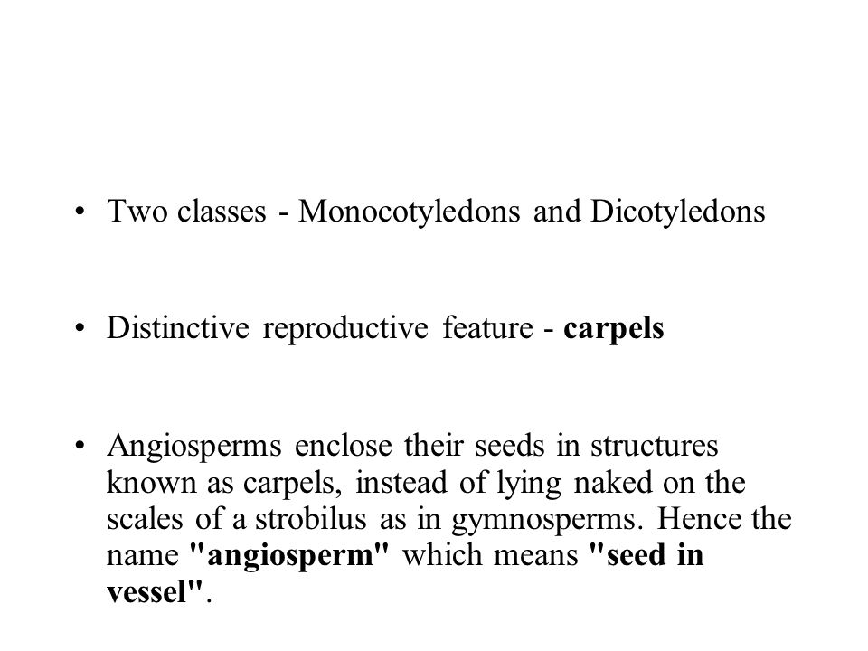 Two classes - Monocotyledons and Dicotyledons Distinctive reproductive feature - carpels Angiosperms enclose their seeds in structures known as carpel