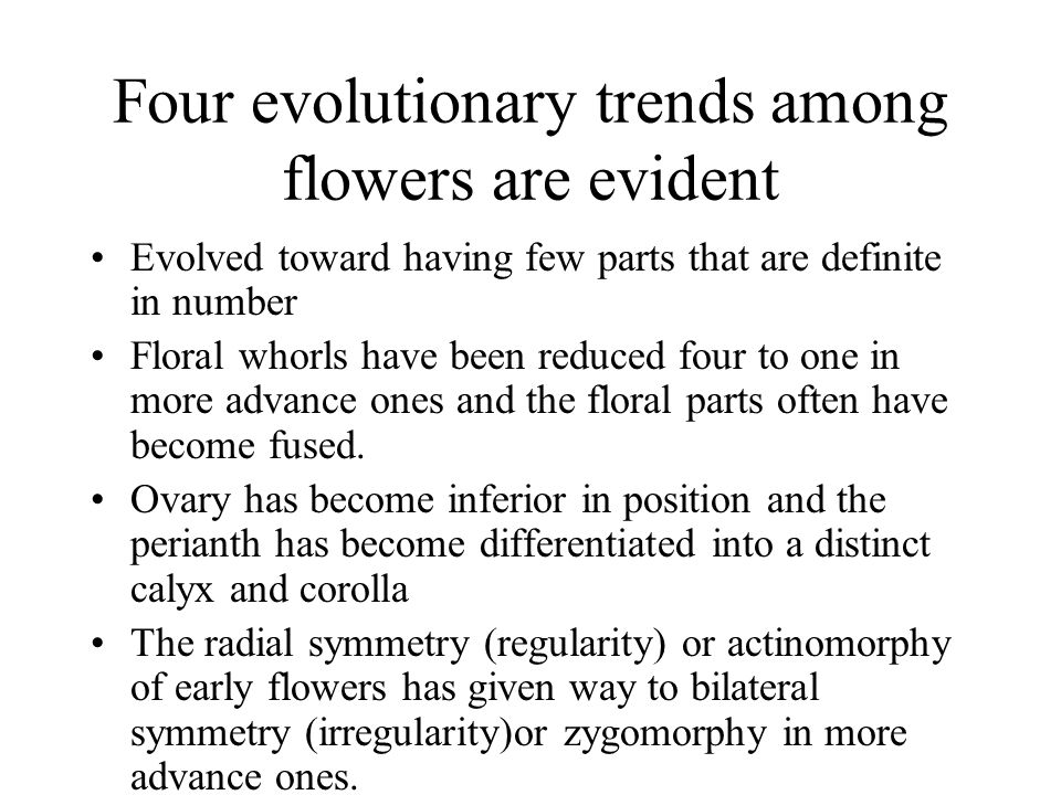 Four evolutionary trends among flowers are evident Evolved toward having few parts that are definite in number Floral whorls have been reduced four to
