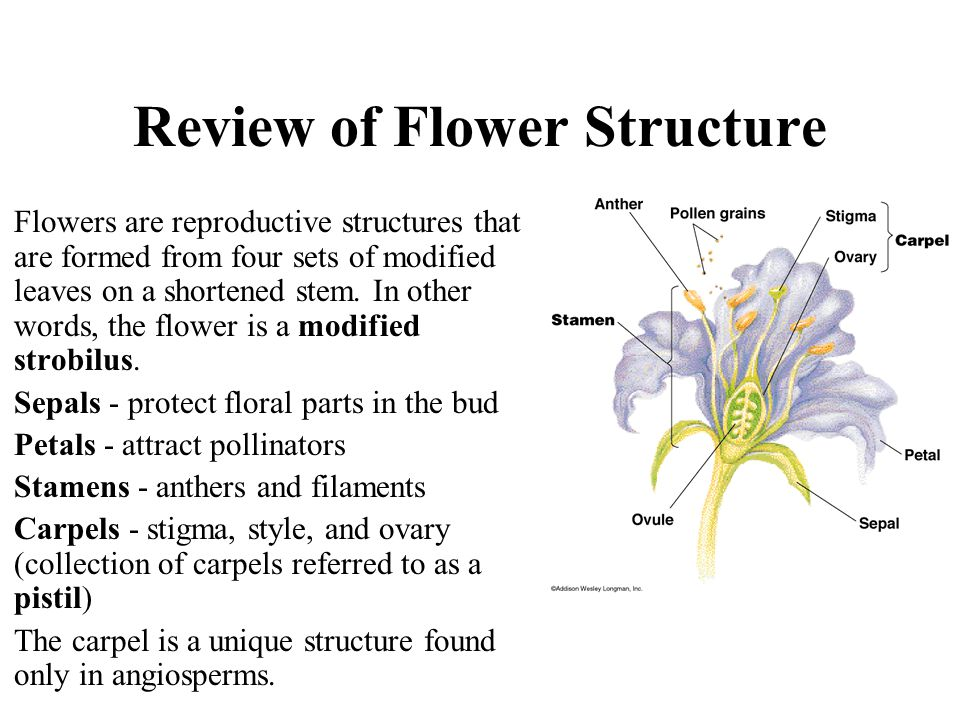 Review of Flower Structure Flowers are reproductive structures that are formed from four sets of modified leaves on a shortened stem. In other words,
