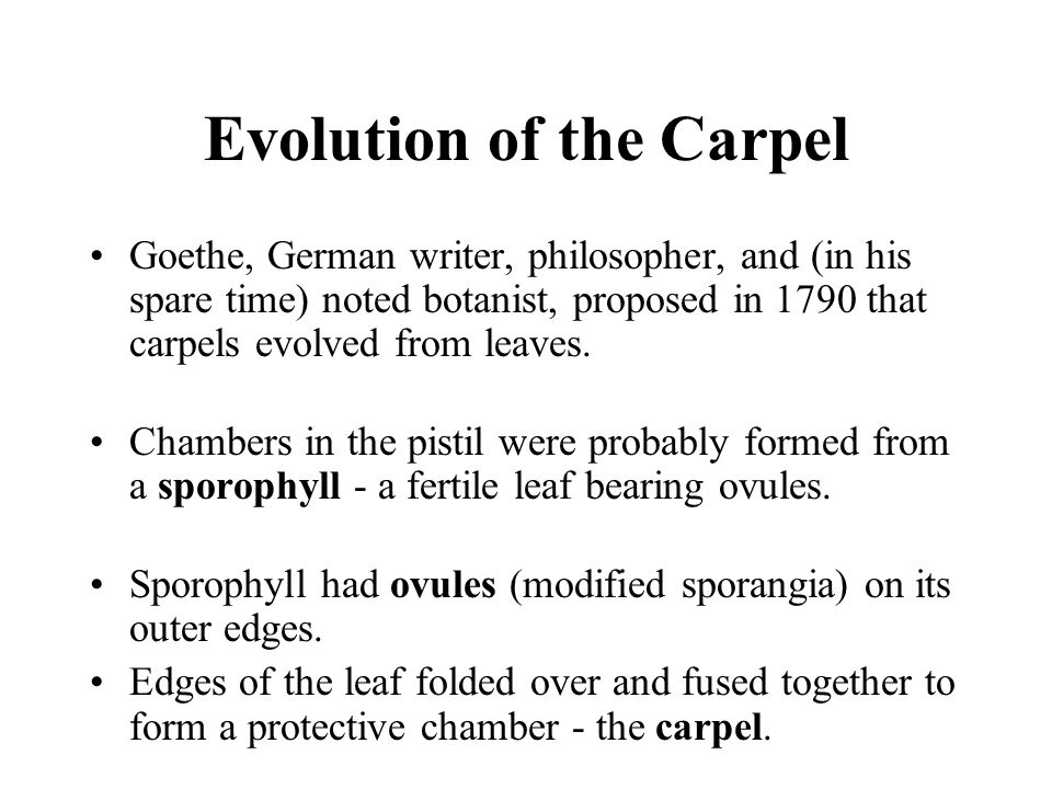 The Carpels The carpels of many early angiosperms were unspecialized Carpels with no specialized areas for the entrapment of pollen grains comparable to specialized stigmas of most living andiosperms.
