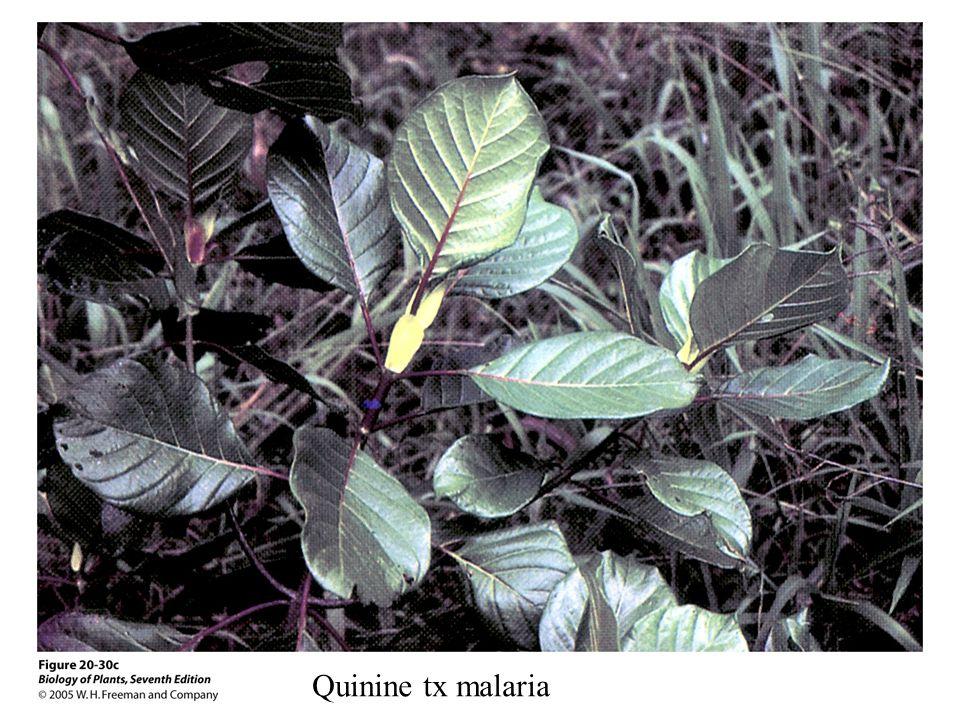 Quinine tx malaria