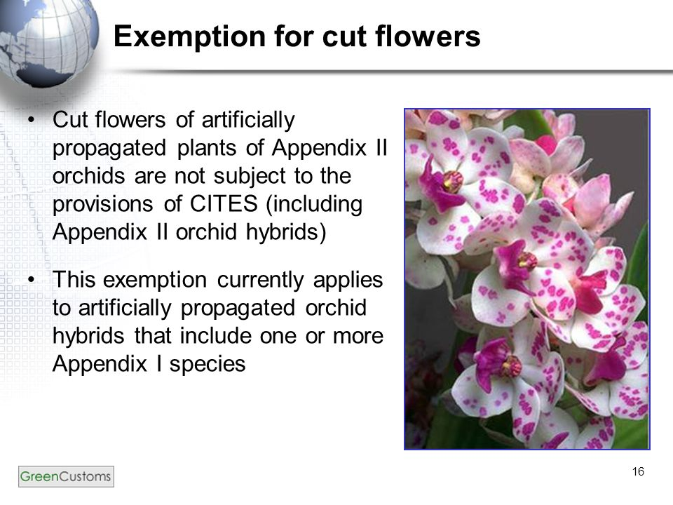 16 Exemption for cut flowers Cut flowers of artificially propagated plants of Appendix II orchids are not subject to the provisions of CITES (includin
