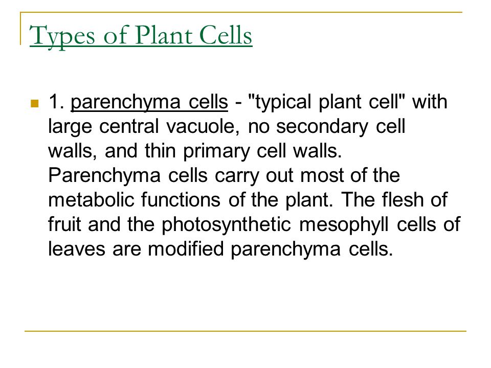 Types of Plant Cells 1.
