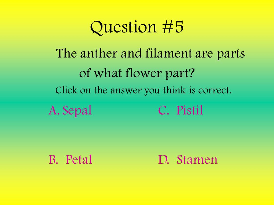 Question #4 What is a Sepal? Click on the answer you think is correct. A.The Female Reproductive Organ B. The Male Reproductive Organ C. The protectio