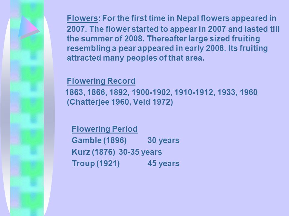 Flowers: For the first time in Nepal flowers appeared in 2007. The flower started to appear in 2007 and lasted till the summer of 2008. Thereafter lar