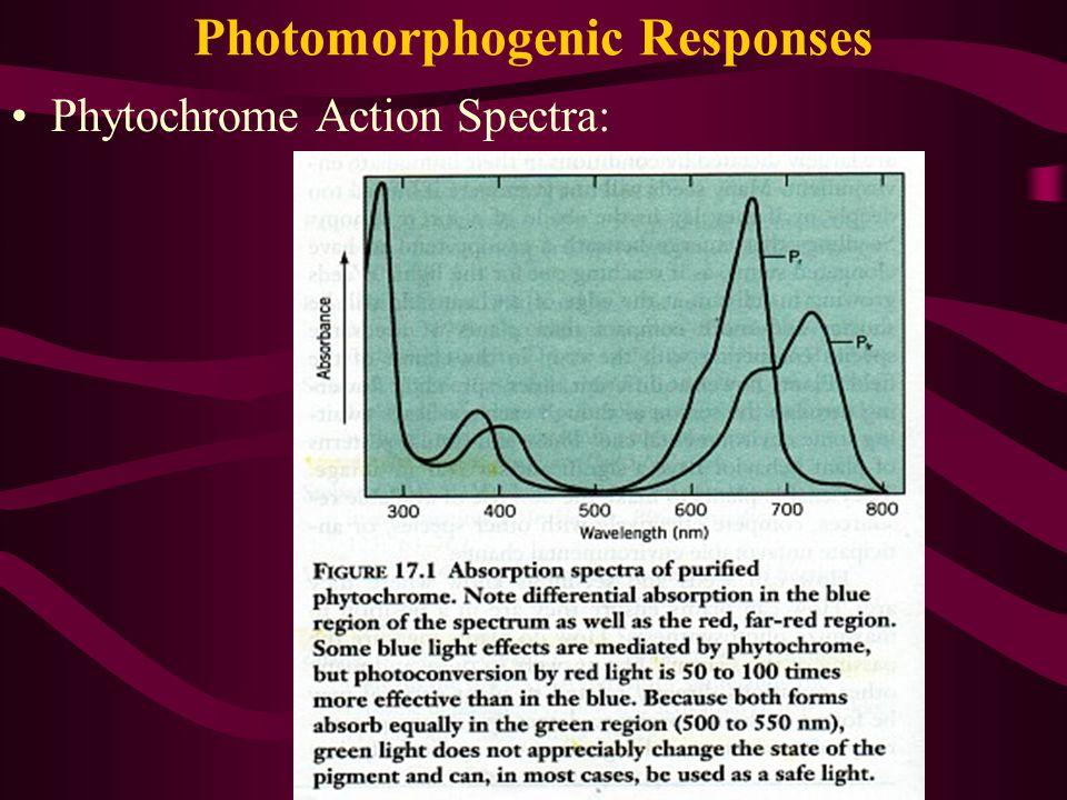 Photomorphogenic Responses Phytochrome Action Spectra: