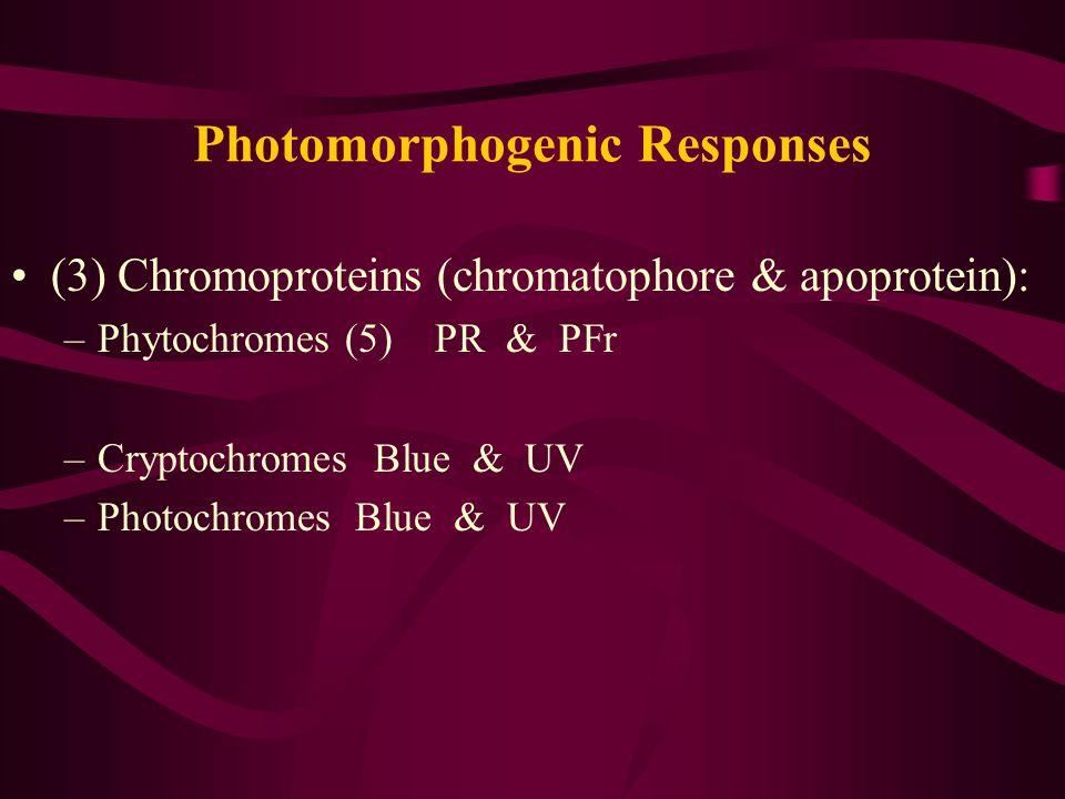 Photomorphogenic Responses (3) Chromoproteins (chromatophore & apoprotein): –Phytochromes (5) PR & PFr –Cryptochromes Blue & UV –Photochromes Blue & UV