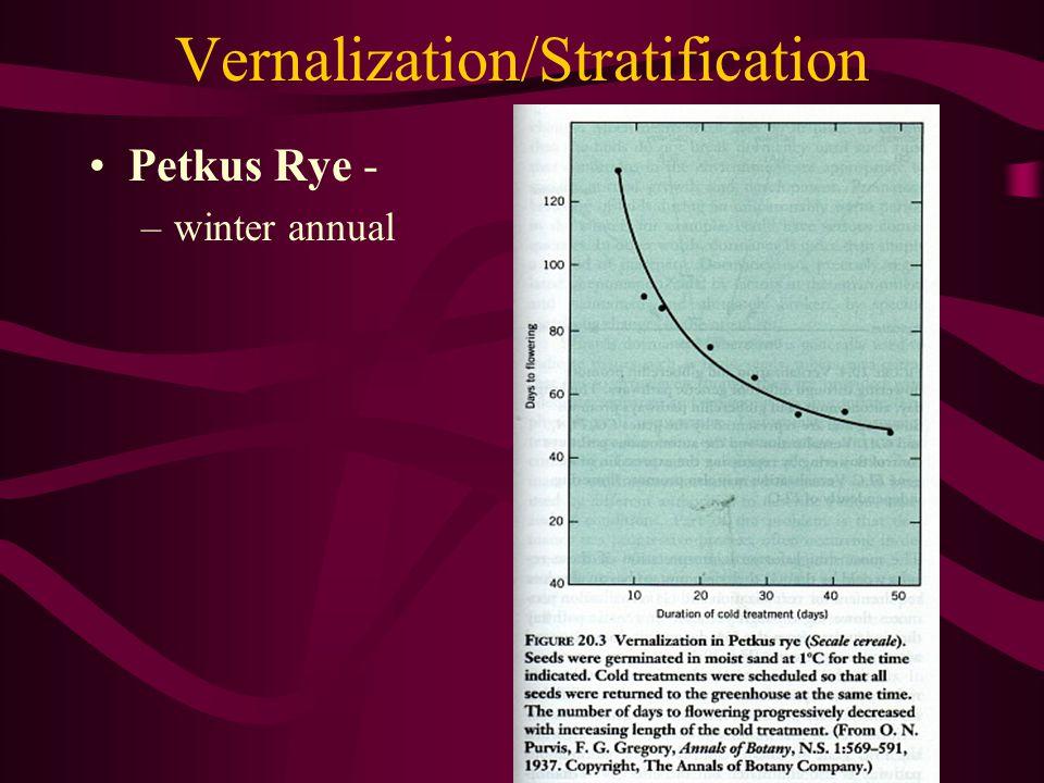 Vernalization/Stratification Petkus Rye - –winter annual