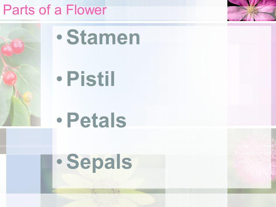 Parts of a Flower Stamen Pistil Petals Sepals