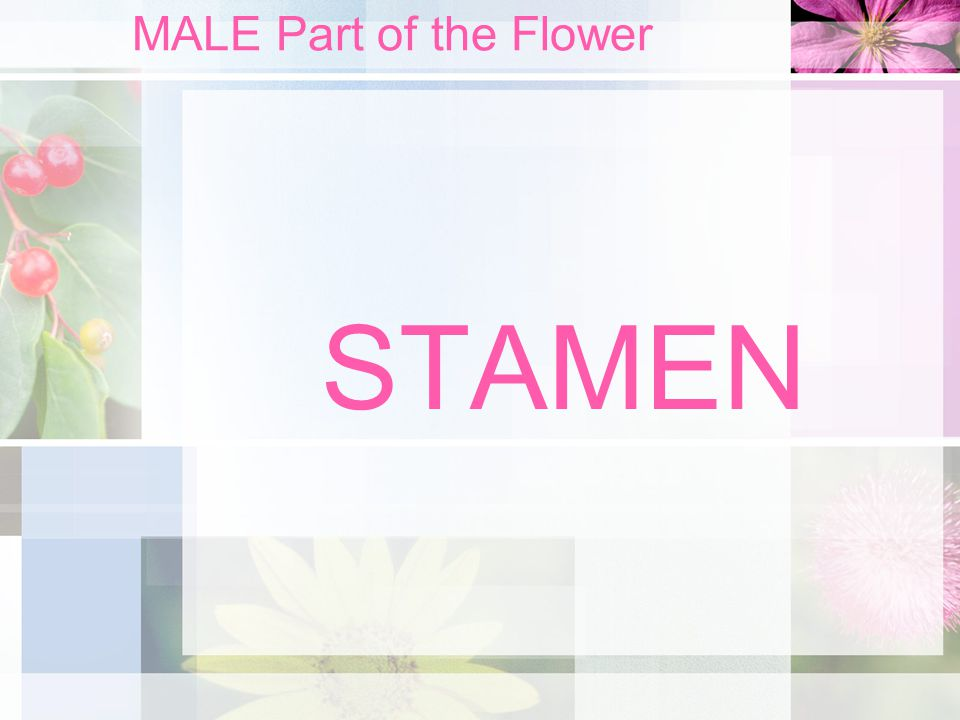 MALE Part of the Flower STAMEN