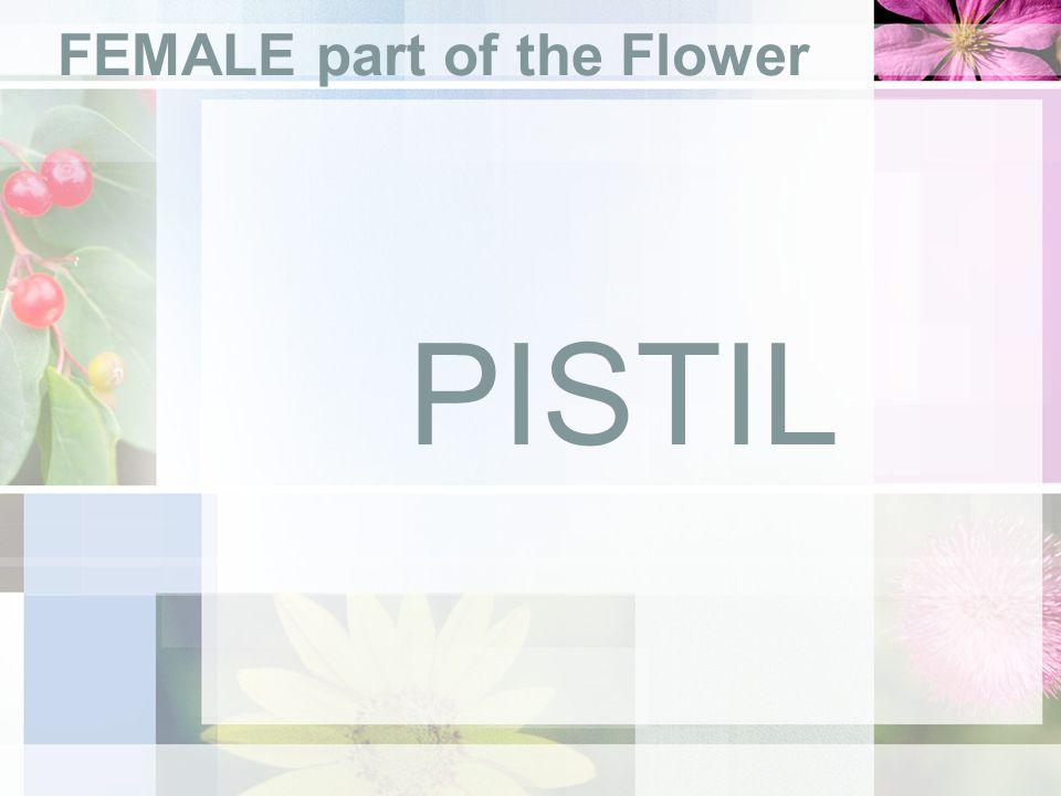 FEMALE part of the Flower PISTIL