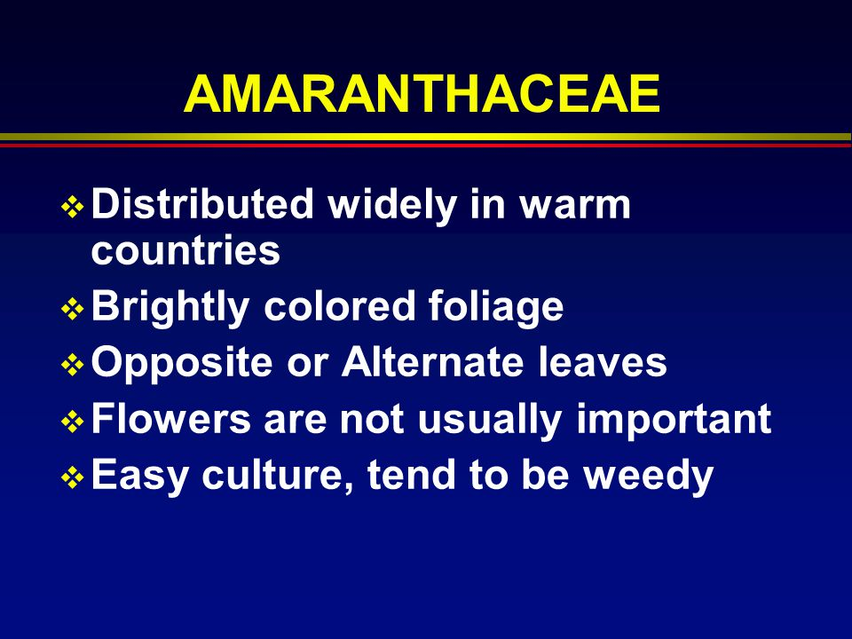 AMARANTHACEAE Distributed widely in warm countries Brightly colored foliage Opposite or Alternate leaves Flowers are not usually important Easy cultur
