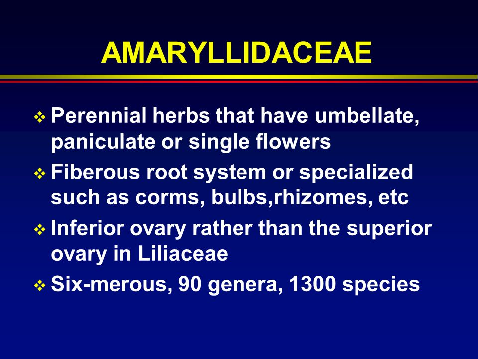 AMARYLLIDACEAE Perennial herbs that have umbellate, paniculate or single flowers Fiberous root system or specialized such as corms, bulbs,rhizomes, et