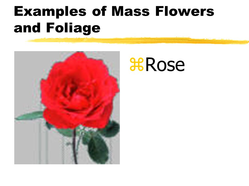 Examples of Mass Flowers and Foliage z Rose