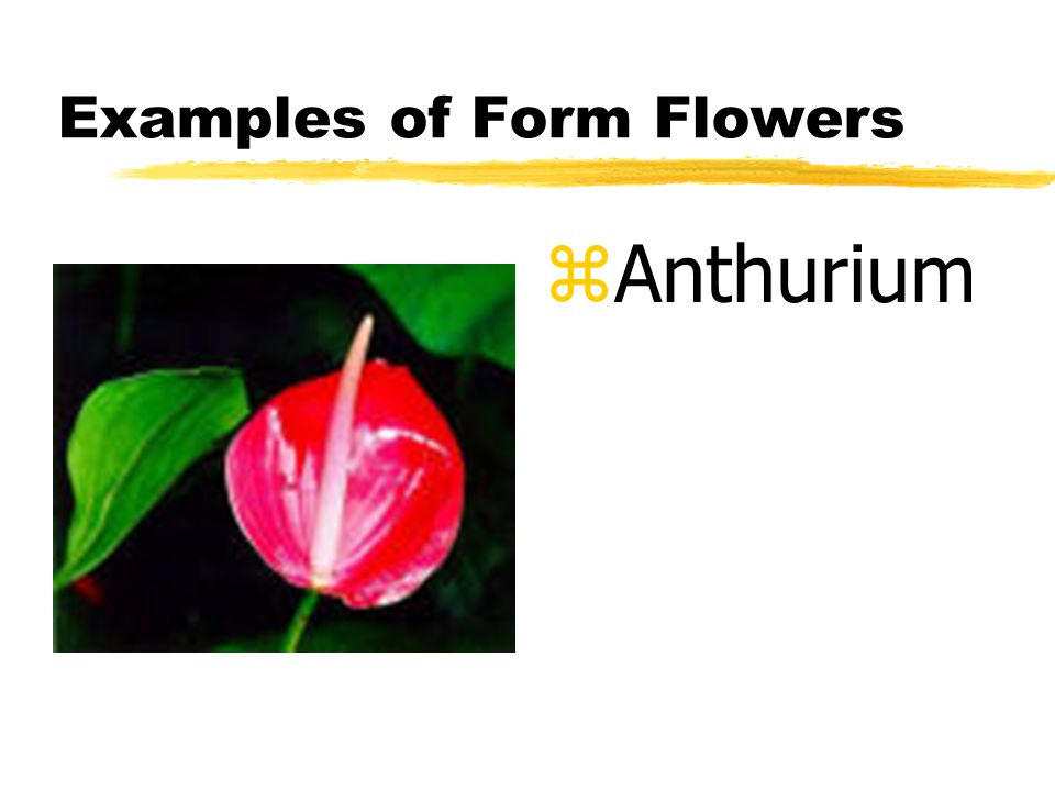 Examples of Form Flowers z Anthurium