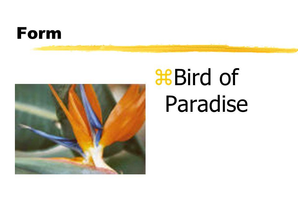 Form z Bird of Paradise