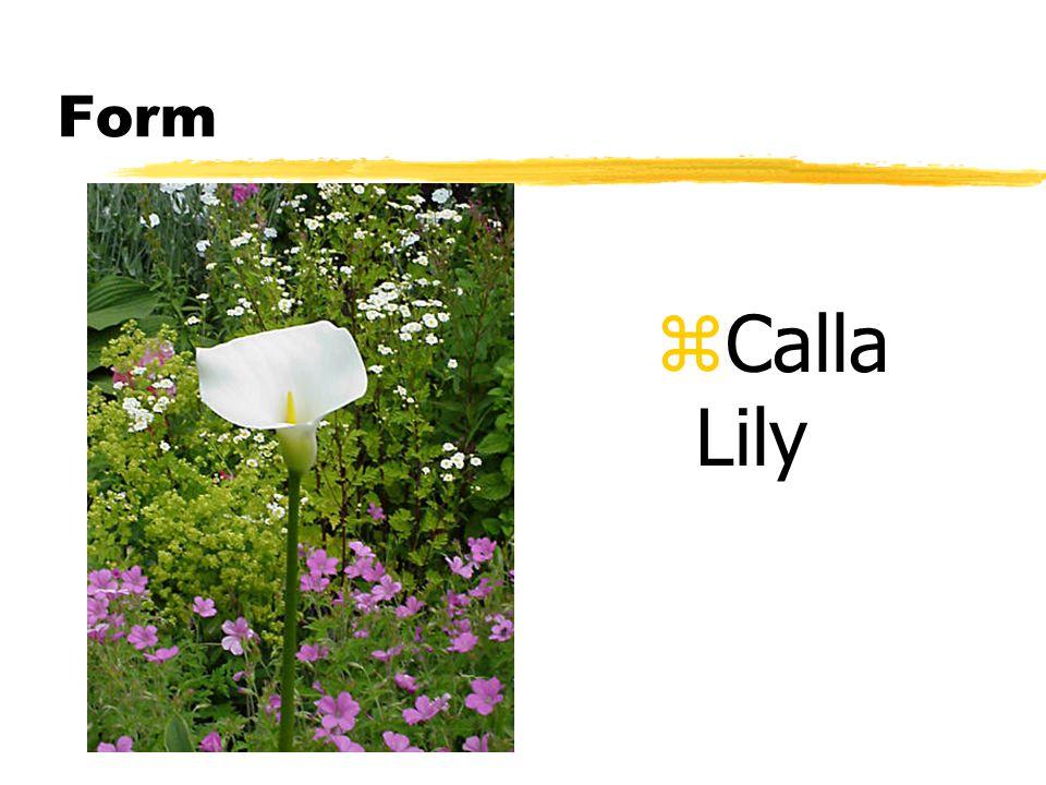 Form z Calla Lily