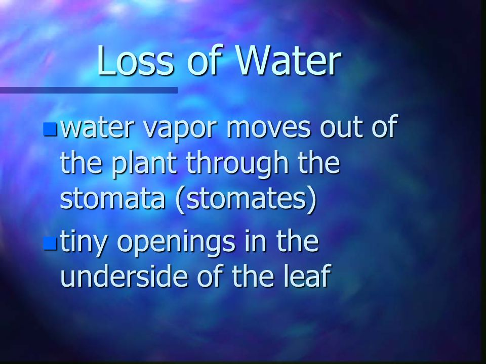 Transpiration n gases and water vapor move from an area of greater concentration to an area of lesser concentration