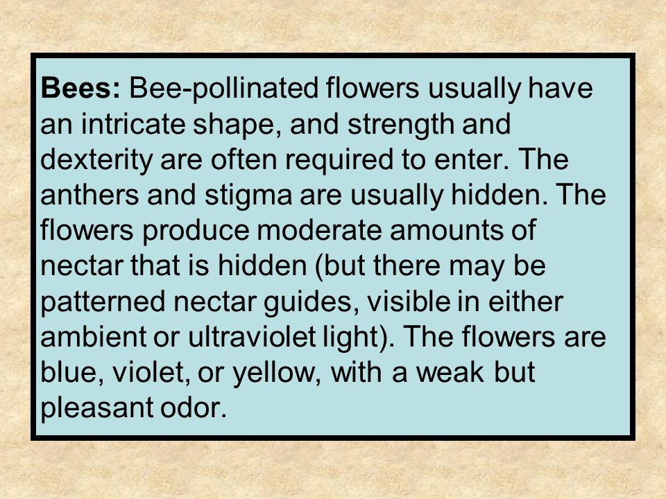 Bees: Bee-pollinated flowers usually have an intricate shape, and strength and dexterity are often required to enter. The anthers and stigma are usual