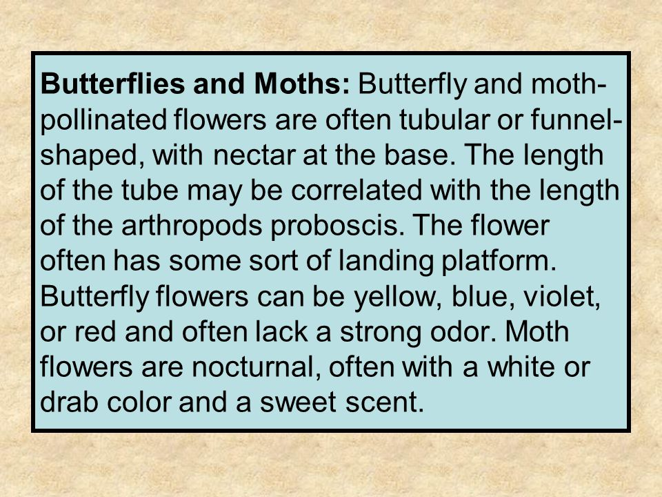 Butterflies and Moths: Butterfly and moth- pollinated flowers are often tubular or funnel- shaped, with nectar at the base. The length of the tube may