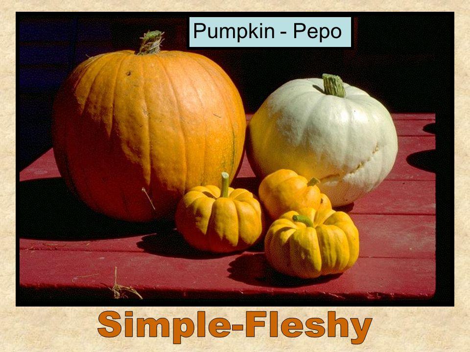 Pumpkin - Pepo