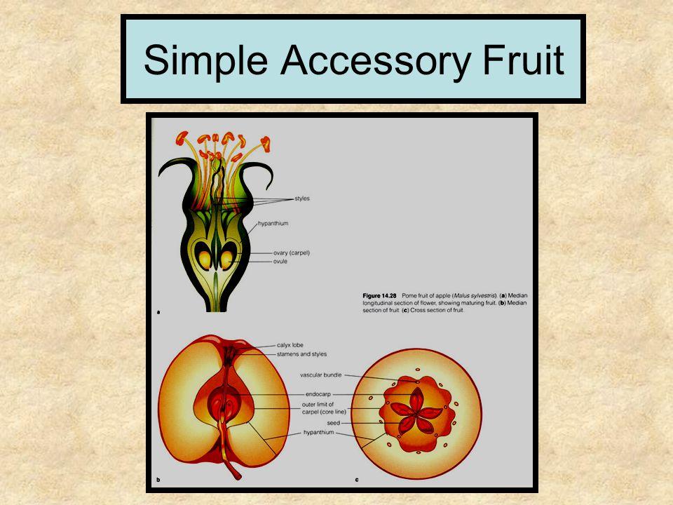 Simple Accessory Fruit