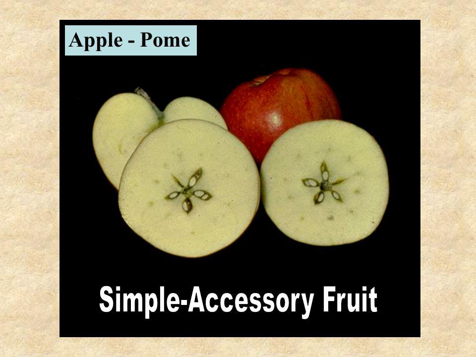 Apple - Pome