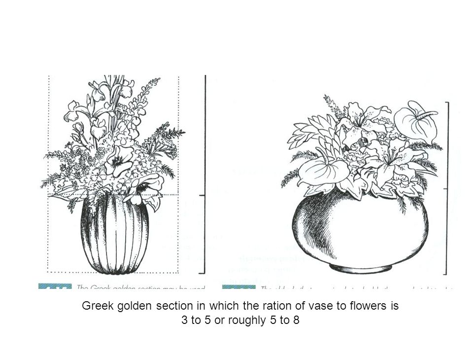 Greek golden section in which the ration of vase to flowers is 3 to 5 or roughly 5 to 8