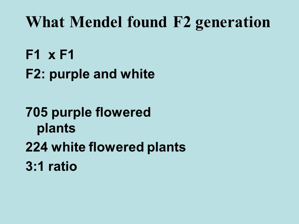 F2: purple and white 705 purple flowered plants 224 white flowered plants 3:1 ratio What Mendel found F2 generation