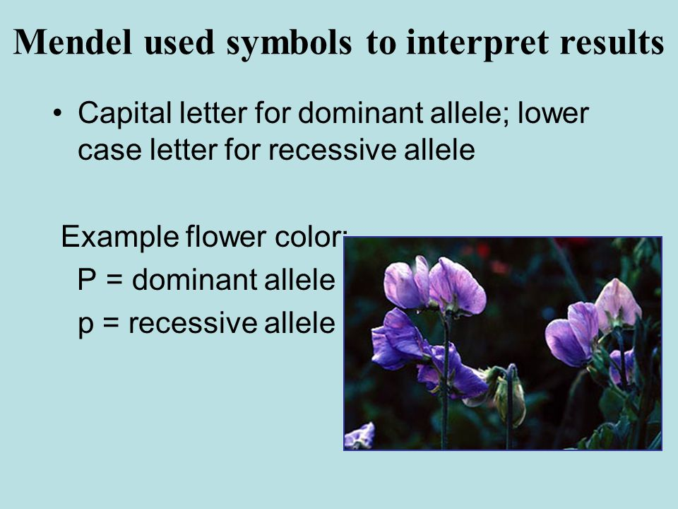 Capital letter for dominant allele; lower case letter for recessive allele Example flower color: P = dominant allele p = recessive allele Mendel used symbols to interpret results