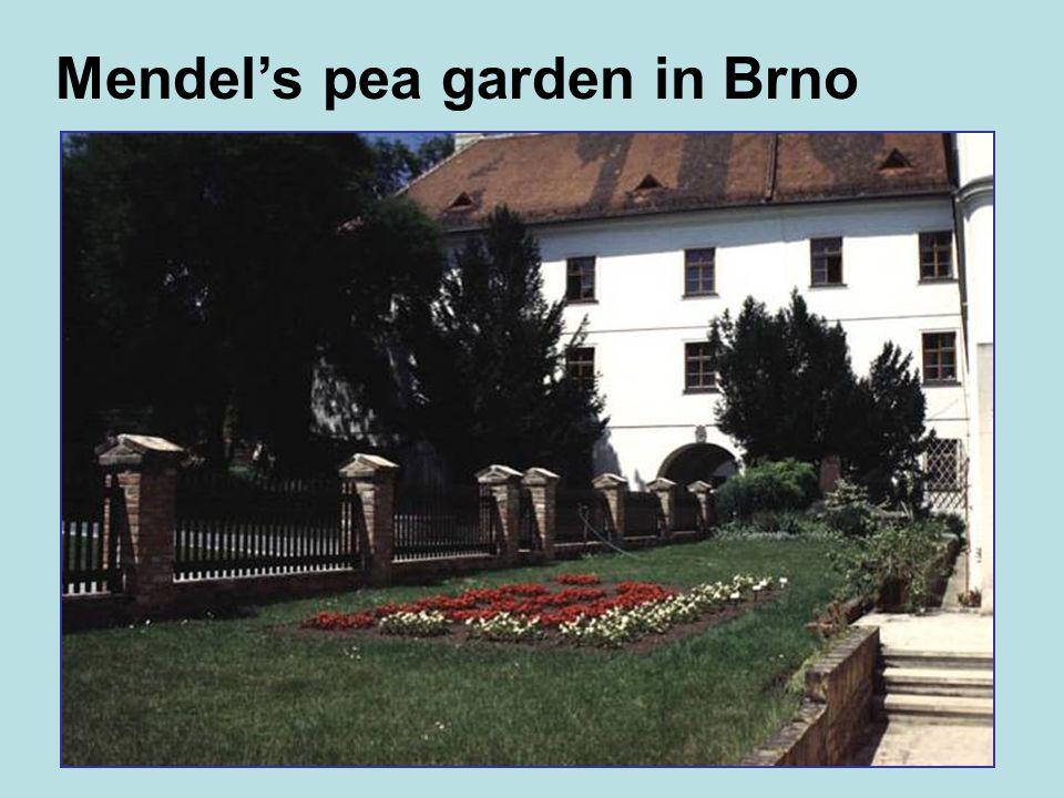 Mendels pea garden in Brno
