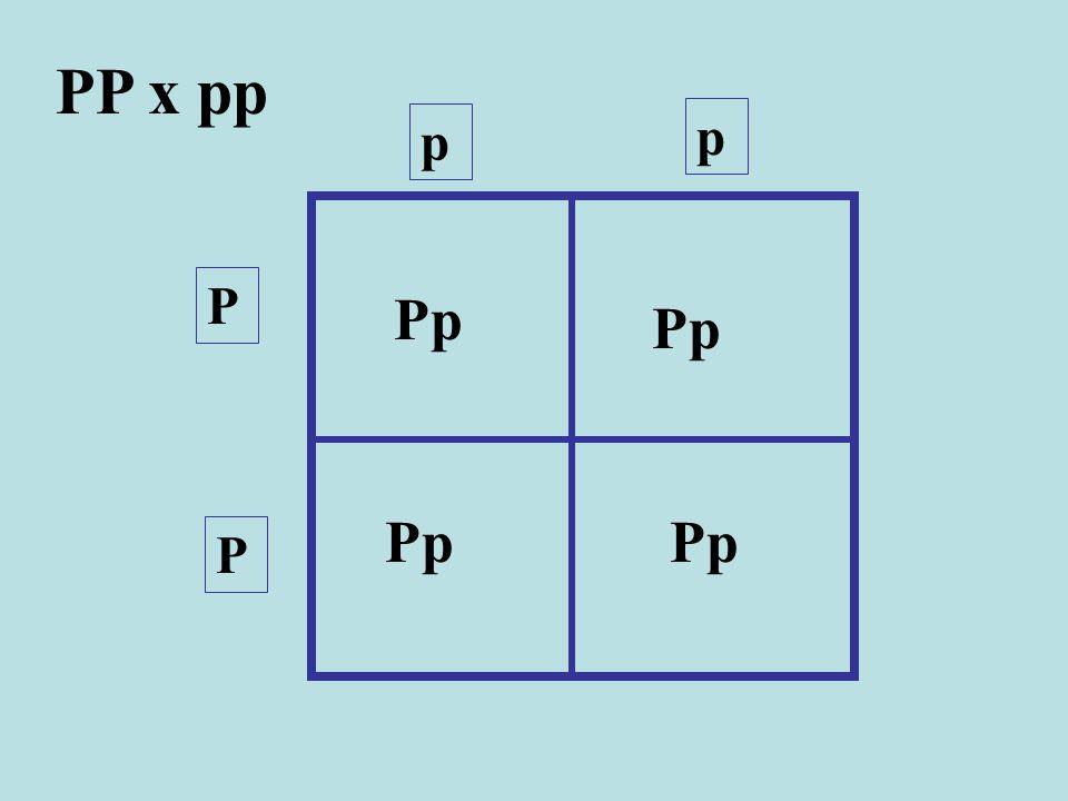 PP x pp p p P P Pp