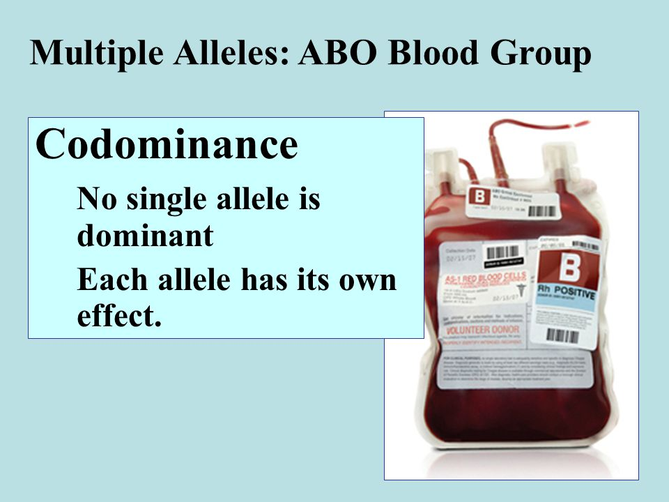 Multiple Alleles: ABO Blood Group Codominance No single allele is dominant Each allele has its own effect.